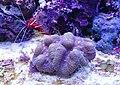 Zootopia aquarium 4.jpg
