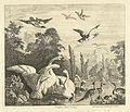 Zwanen en eenden in een vogelvijver.jpeg