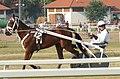 Ügető Magyar Derby 2009 Mariska.jpg