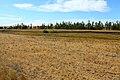 Балка Кишкентайсай. Вид в западном направлении - panoramio (1).jpg