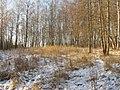 Берёзовый склон - panoramio.jpg