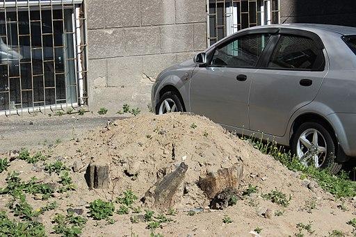 Борщагівський дуб IMG 7864