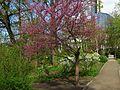 Ботанічний сад ім. І.Фоміна IMG 8293.jpg