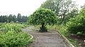 Ботанічний сад 10.jpg