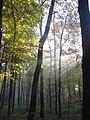 Вересень, ранковий ліс.JPG