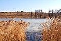 Весна на подходе (пруд на даче)... - panoramio.jpg