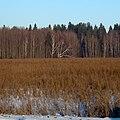 В районе Усть-Качки - panoramio.jpg