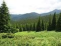 Гірський пейзаж. Підйом на г. Говерлу.jpg