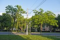 Два Горіха Зібольда навпроти будинку №144 по вул. Пирогова P1390916.jpg
