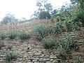 Дворец-лятна резиденция каменен зид.JPG