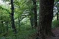 Демерджи, деревья на склонах, лес, Крым.jpg