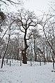 Дуб Шевченка в парку Березовий гай 03.jpg