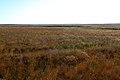 Жаркая степь в Акбулакском районе - panoramio.jpg