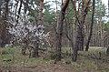 Заказник лісовий Стугна 02.jpg