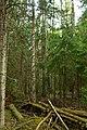 Кургальский полуостров, водокачка в лесу (1).jpg