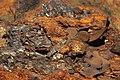 Мыс Железный Рог. Камни на берегу.jpg