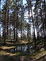 Озерцо в лесу - panoramio (1).jpg