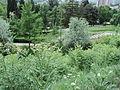 Парк шума Гази Баба во мај (93).JPG
