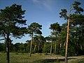 Соскновый бор на острове Ягры - panoramio.jpg