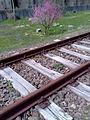 Старата ЖП линия.jpg