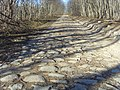 Старая ингерманландская дорога - panoramio.jpg