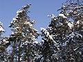 Украина, Киев - Голосеевский лес 176.jpg