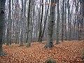 Украина, Киев - Голосеевский лес 210.JPG