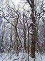 Чернечий Ліс 13.jpg
