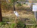 Якутский зоопарк 06.JPG