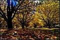 بوی پاییز - panoramio.jpg