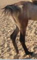 ساقا حصان 11.PNG