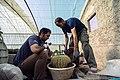 عکس از نحوه تعویض گلدان و خاک کاکتوس در گلخانه - مکان گلخانه دنیای خار در روستای مبارک آباد قم 05.jpg