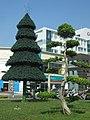 嘉義市 嘉義基督教醫院外 聖誕樹 - panoramio.jpg