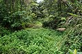 大舌满溪生態步道 Tansibuan Creek Eco Trail - panoramio.jpg