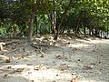 東興公園裡的小土丘 - panoramio.jpg