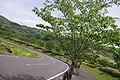 観音池公園 - panoramio (1).jpg
