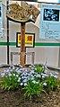郡山駅西口のヒメシャガ.jpg