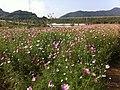 장성 평림댐 ^35 - panoramio.jpg