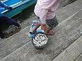 0016Hagonoy Fish Port River Bancas Birds 23.jpg