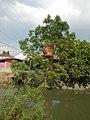 01873jfPinagbarilan Cantulinan Irrigation Baliuag Bulacan Dikes Roadfvf 16.JPG