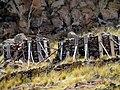 10 Oldest tombsSillustani Peru 3404 (14956143817).jpg