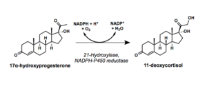 21-Hydroxylase - Reaction scheme showing hydroxylation of 17a-hydroxyprogesterone