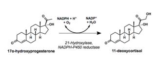 21-Hydroxylase - Reaction scheme showing hydroxylation of 17a-hydroxyprogesterone