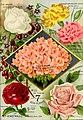 1893 Maule's seed catalogue BHL42541339.jpg