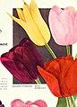 1945 Iris tulips daffodils (1945) (16050586913).jpg