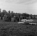 1958 visite d'une délégation INRA au Haras du Pin Cliché Jean Joseph Weber-59.jpg