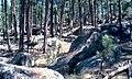 1980 DETO Forest.jpg