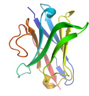 Single-domain antibody