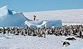 2007 Snow-Hill-Island Luyten-De-Hauwere-Emperor-Penguin-99.jpg