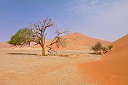 2010-09-25 15-56-59 Namibia Hardap Hammerstein.jpg